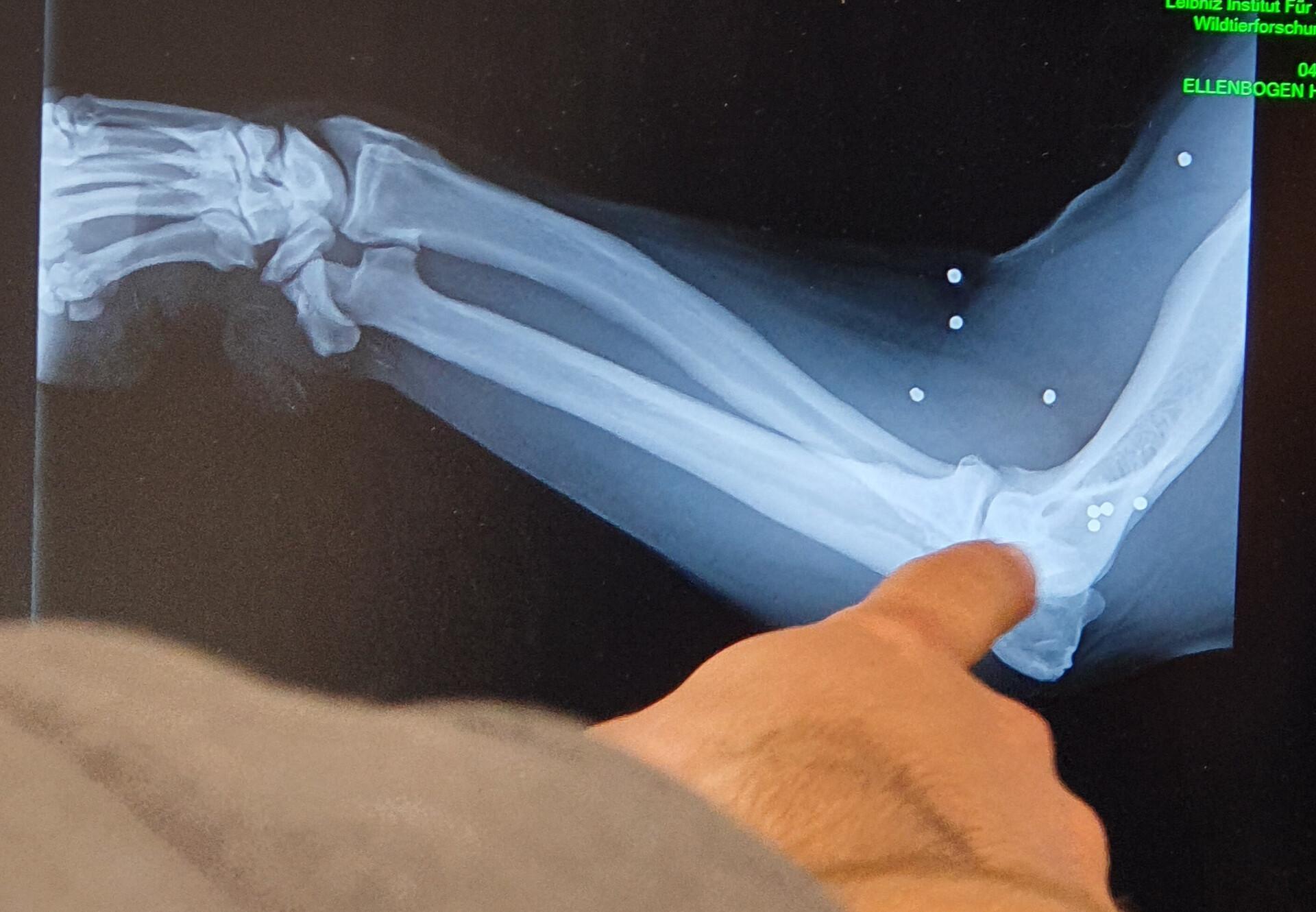 Röntgenaufnahmen vom Vet-Check
