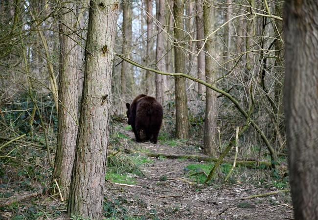 Tapsi ist im Wald unterwegs