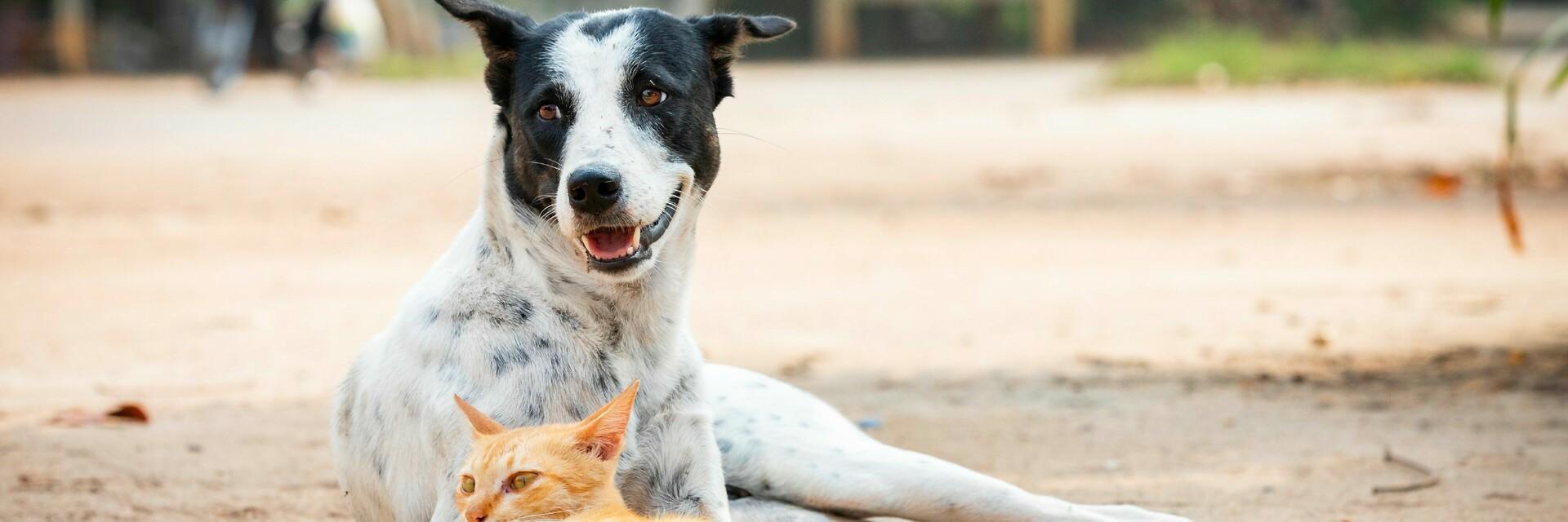 Aide aux animaux errants