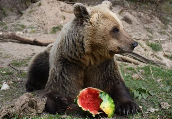Luna frisst Wassermelone