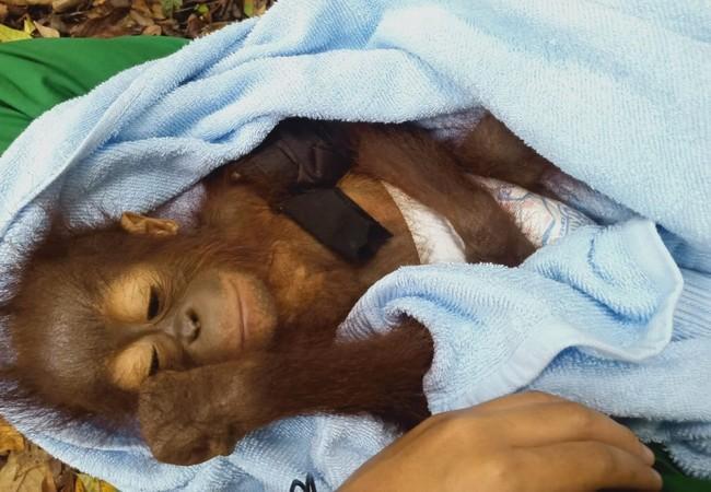Bhima, petit et fragile, arrive à l'L'école de la forêt