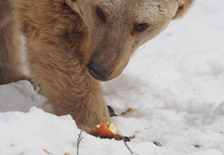 Bär Jerry beim Snacken
