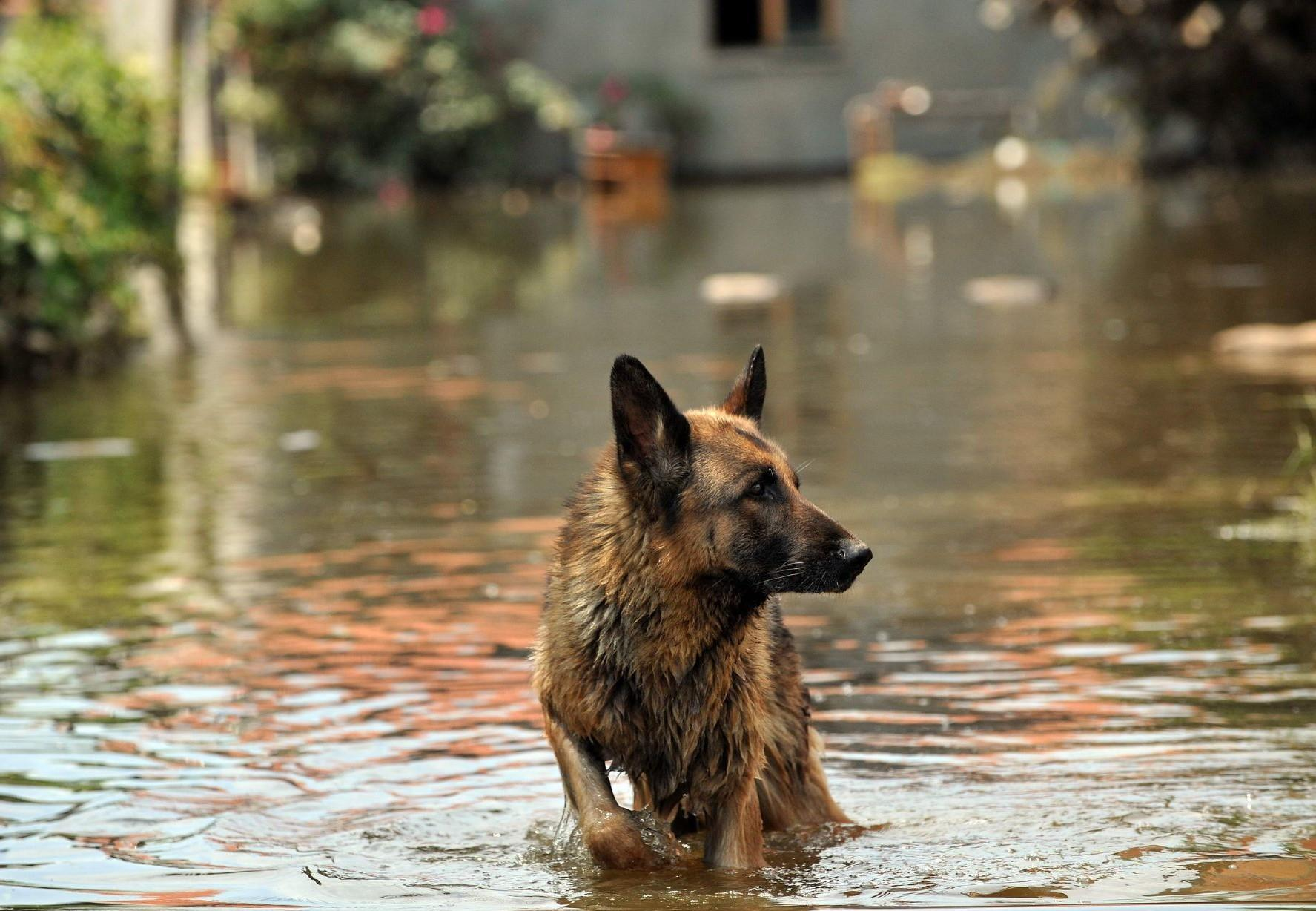 A dog affected by severe flooding