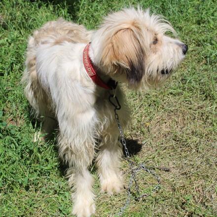 куче Симо (dog Simo)