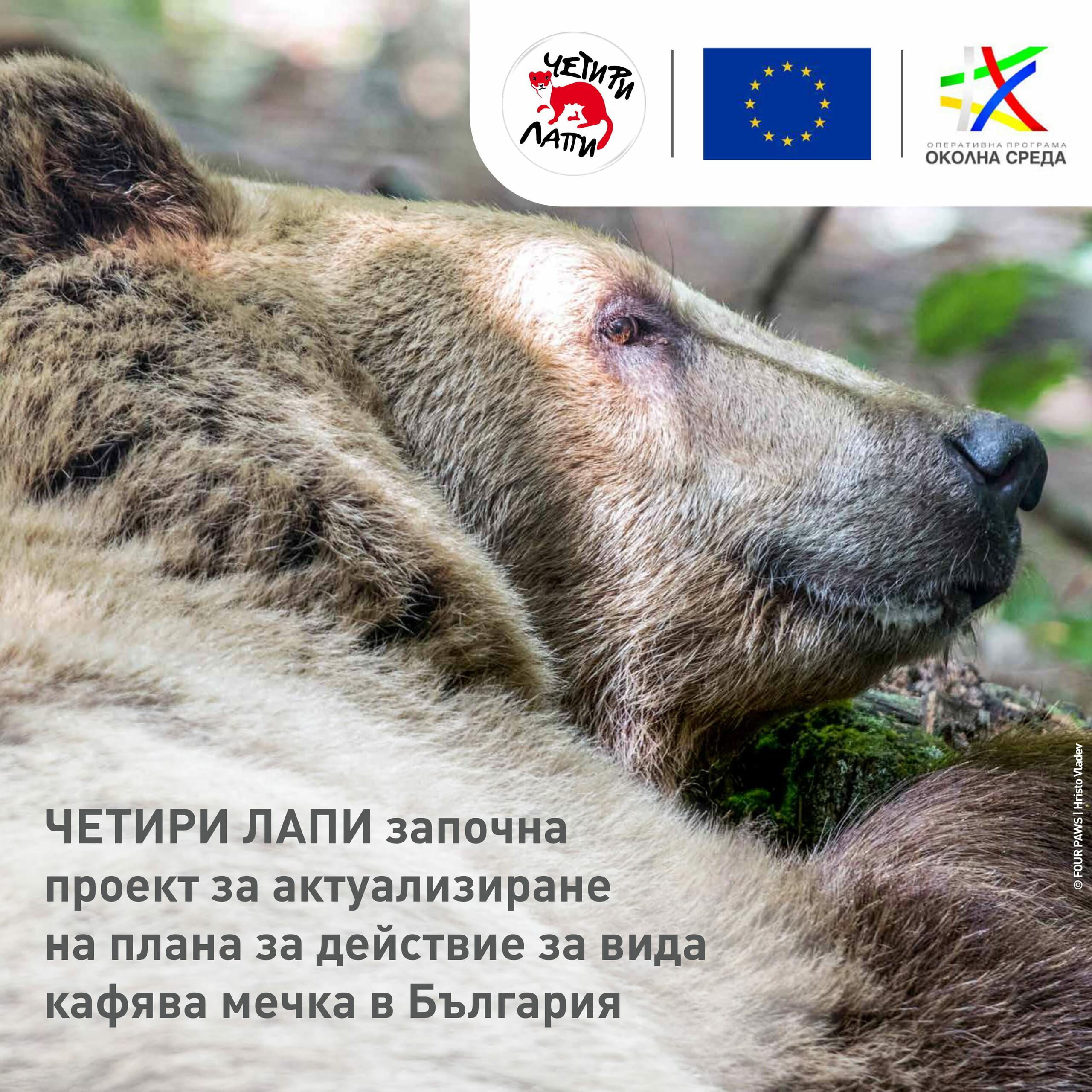 Опазване на кафяви мечки