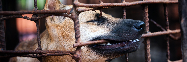 VIER PFOTEN Mitarbeiterin auf einem Markt bei einem Hund im Käfig
