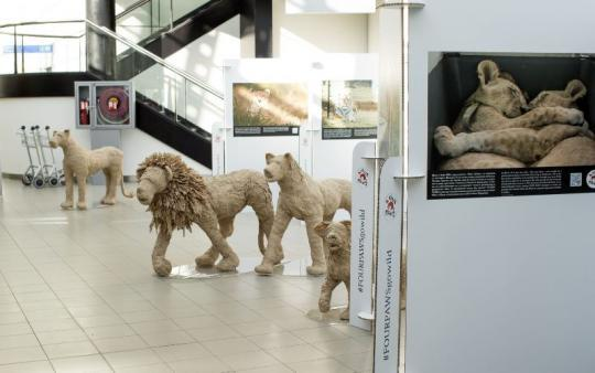 lions-from-paper-airport