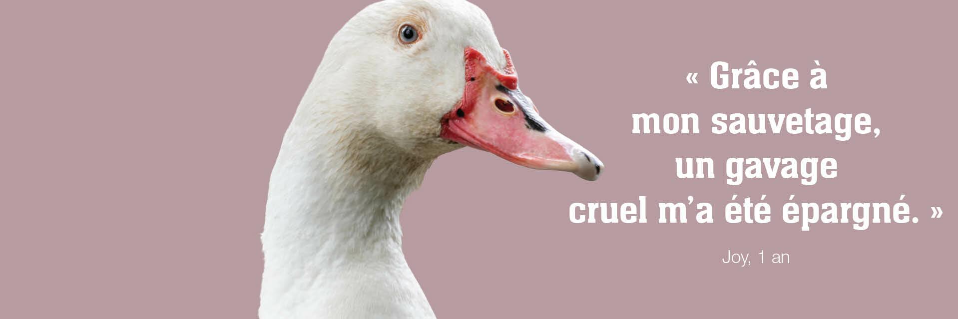 Le canard Joy