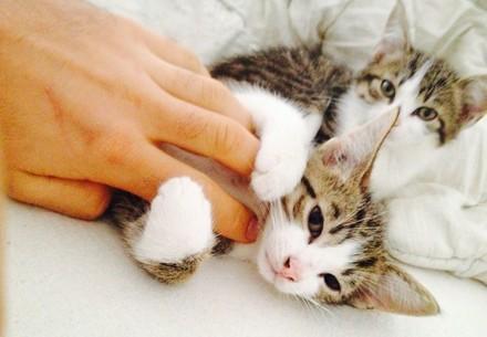 Les heures passées à la maison peuvent s'avérer précieuses lorsqu'elles sont partagées avec votre animal de compagnie
