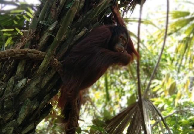 Amalia sitzt hoch oben auf einem Baum