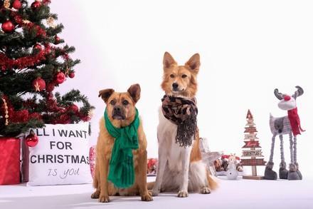 Hunde sitzen vor dem Weihnachtsbaum