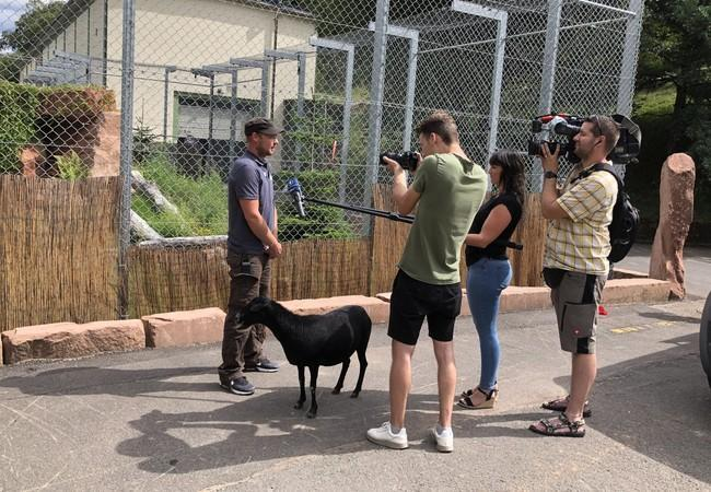 Florian being interviewed during the transfer of Sahib and Jill, and of course, Lulu couldn`t miss this opportunity