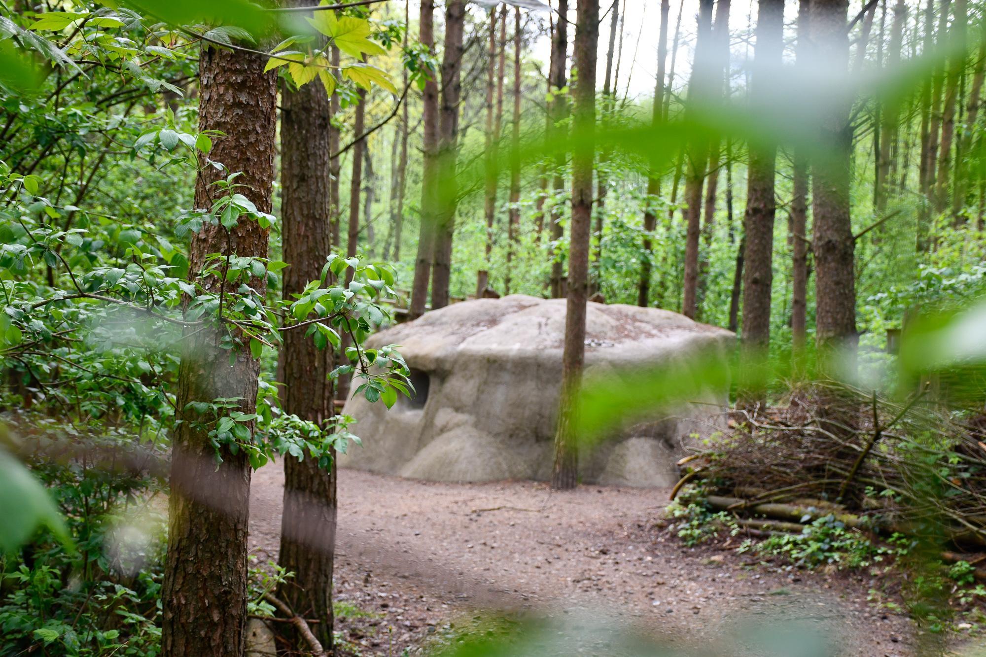 Auf Waldwegen durch das Schutzzentrum