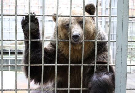 Bär eingesperrt