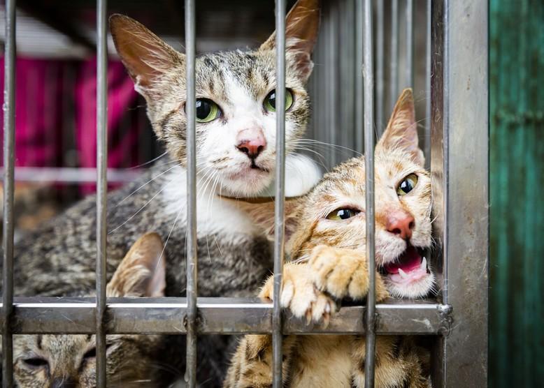 Animal Charity - Cats