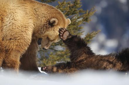 BearWell - Le concept du bien-être animal