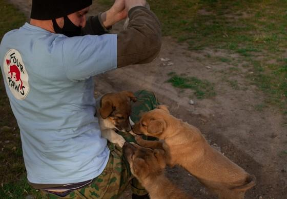 Feeding puppies in Ukraine