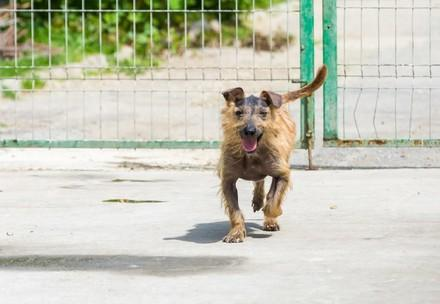 Dog Maxi
