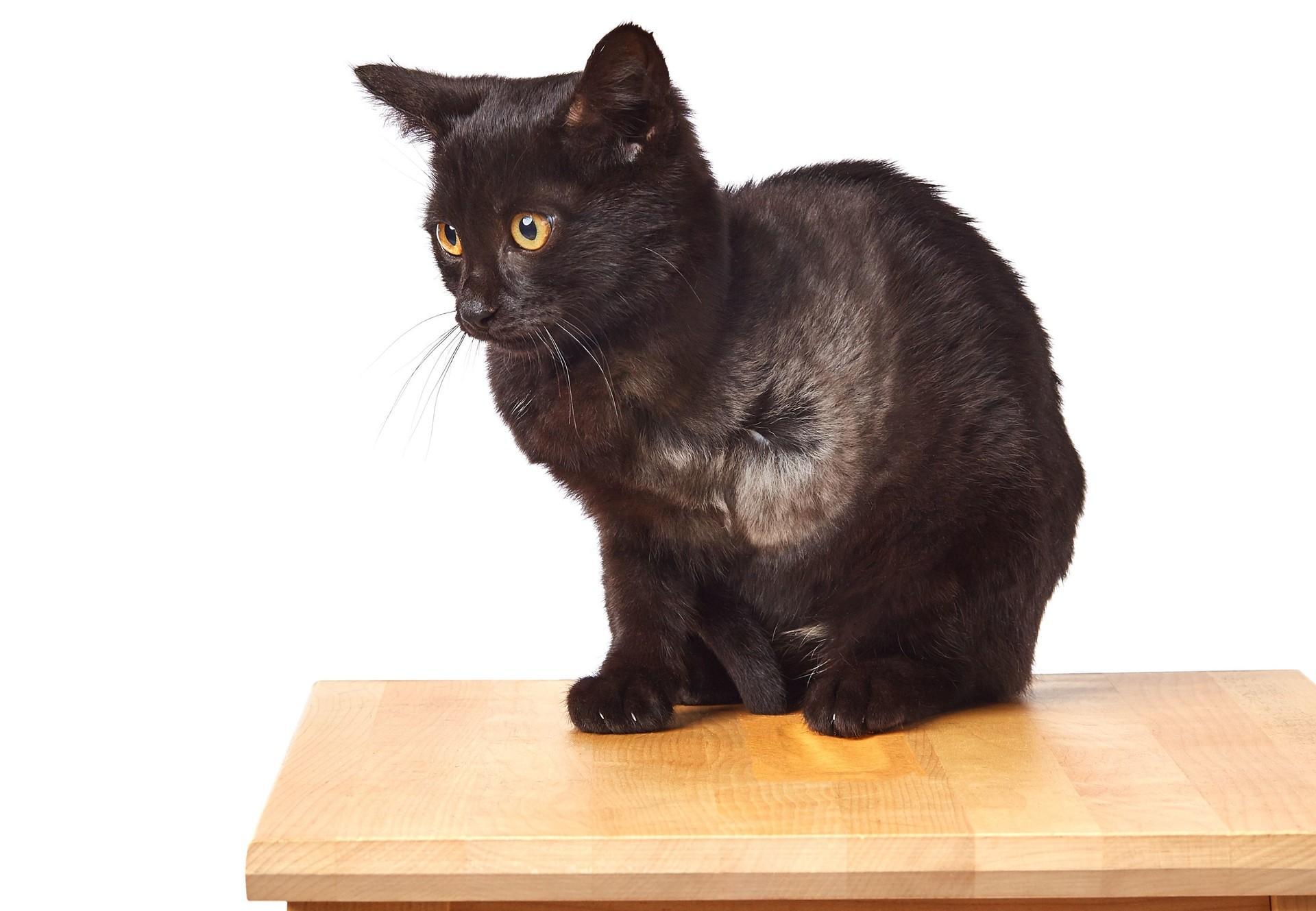 Cat Boris| котка Борис