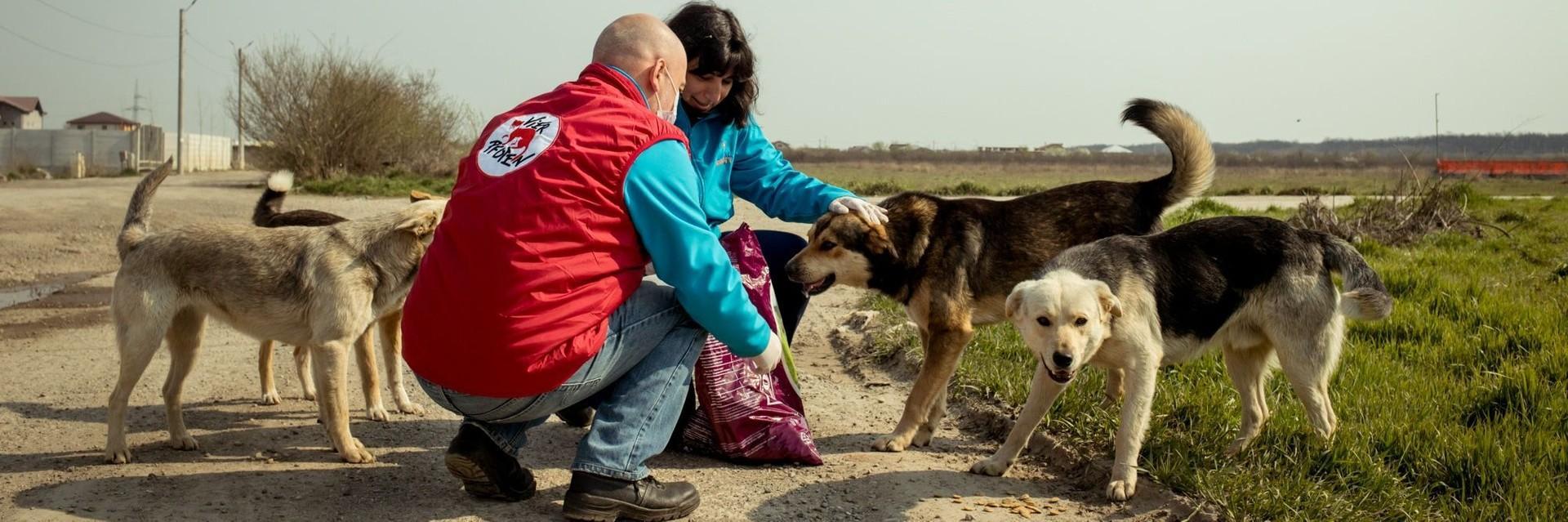 Stray Dog Feeding Program