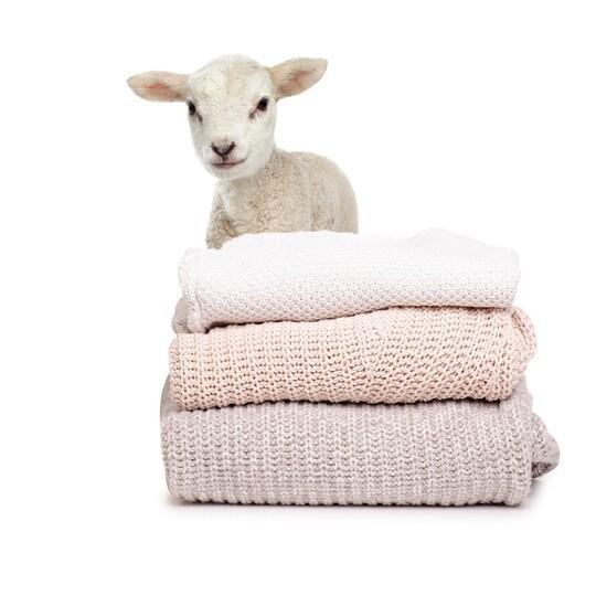 Lamm hinter Kleidung aus Wolle