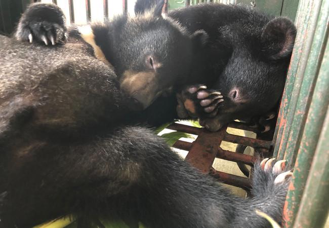 Les oursons sauvés