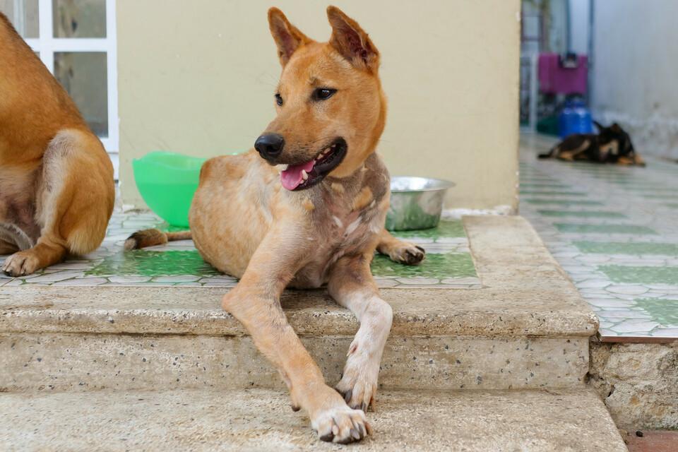 Hund Archie, Vietnam
