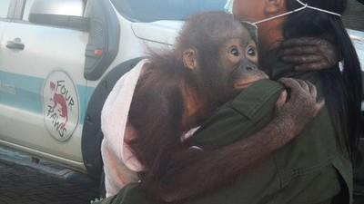 Help us to transport our orphans