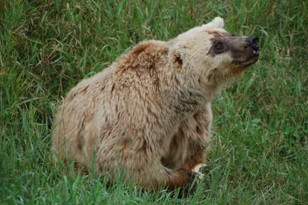Bear Lady M.