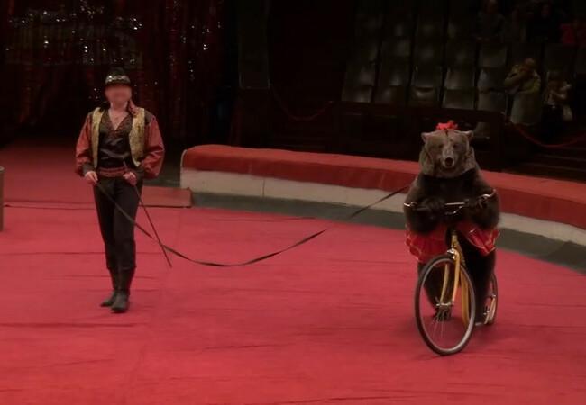 Bär auf Fahrrad im Zirkus