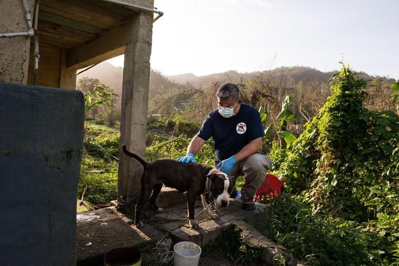 Vet giving treatment to abandoned dog