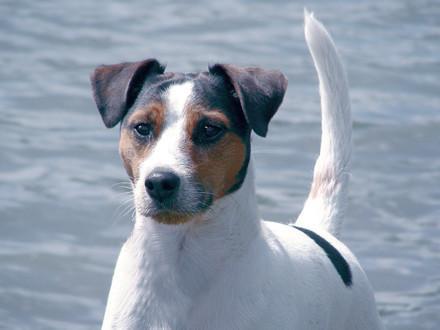 Infos sur les chiens
