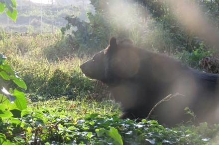 Bär im Bärenwald Ninh Binh