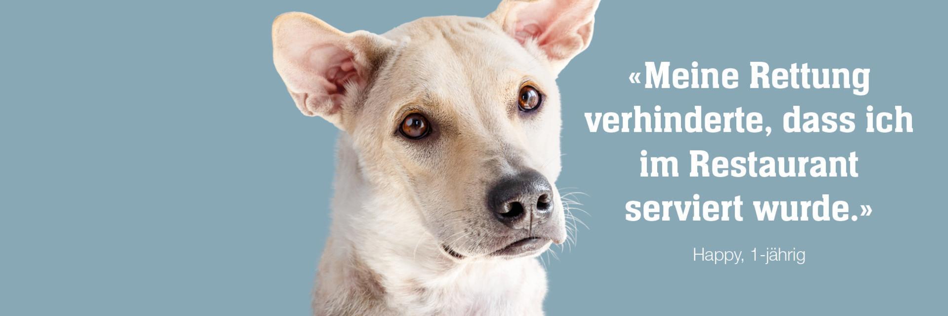 können hunde gurken essen