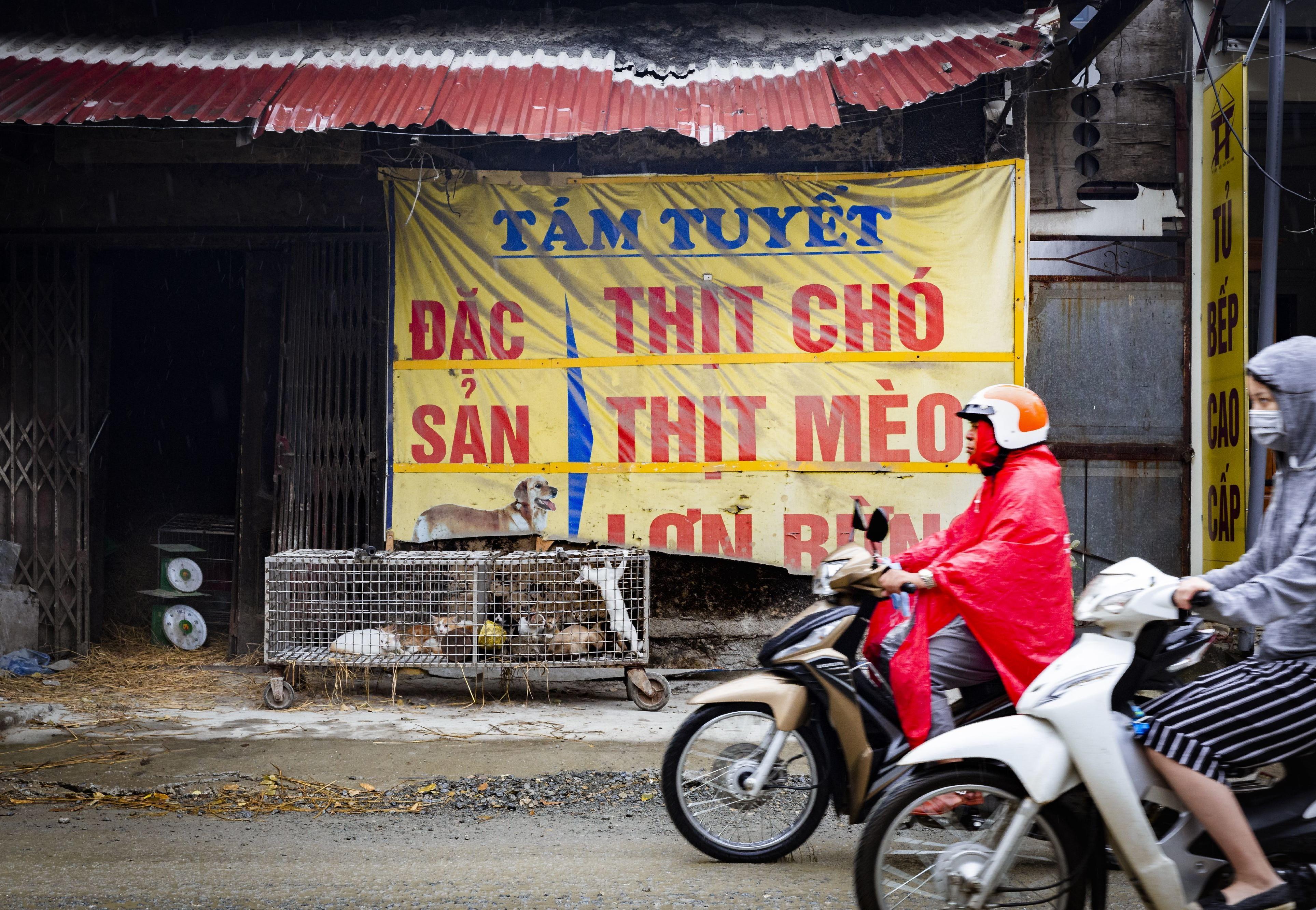 Scooterrijders in Zuidoost-Azië rijden achteloos langs katten in een kooi op straat