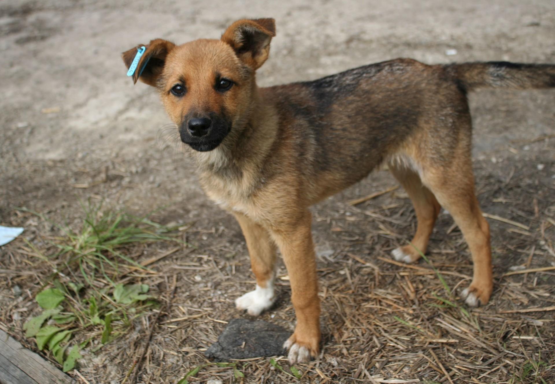 Streunerhund in der Ukraine