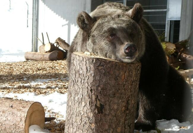 Jambolina in Arosa Bear Sanctuary