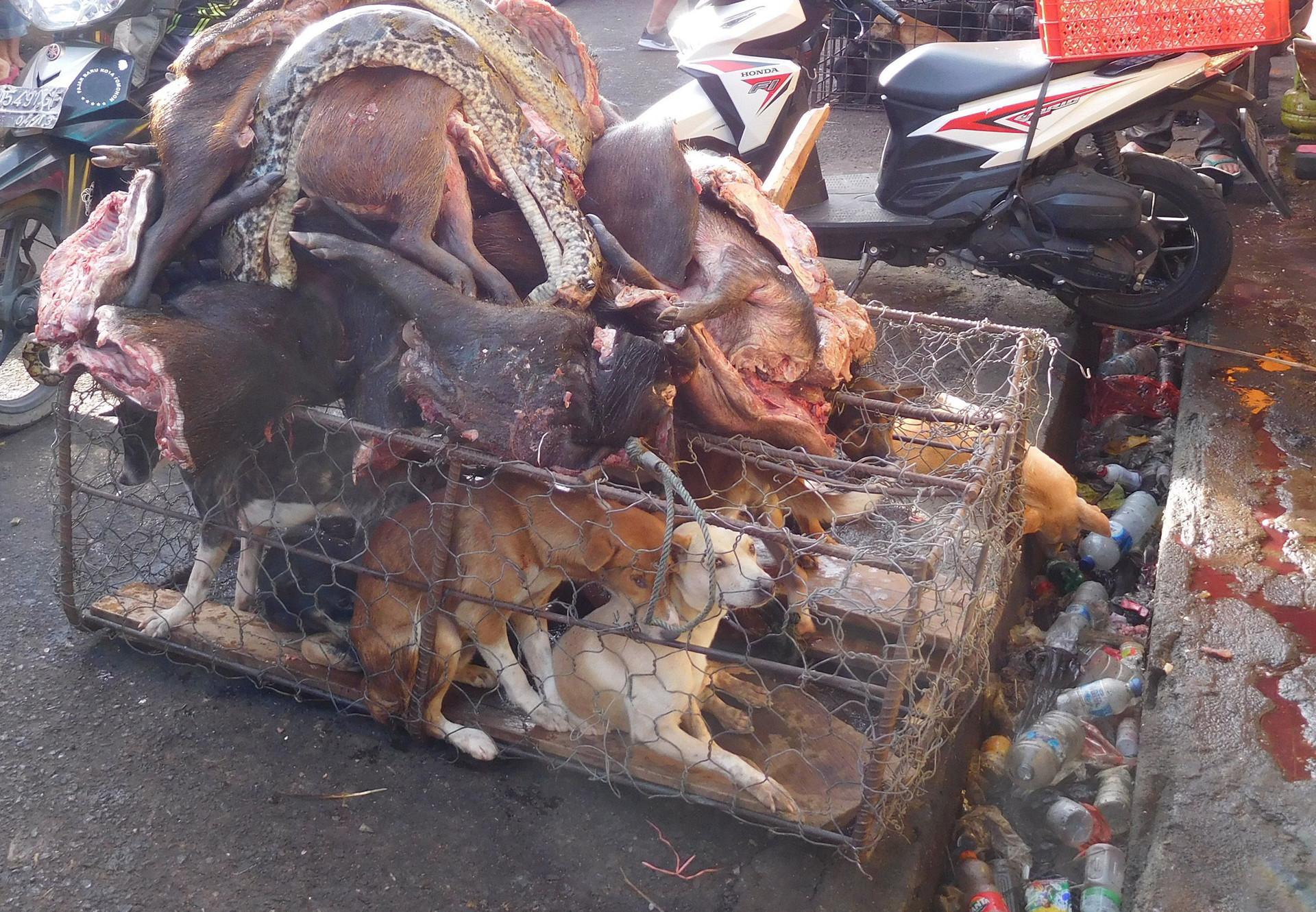 Les dangers des marchés d'animaux vivants