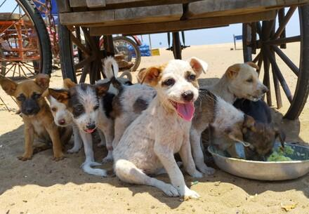A group of stray and street dogs