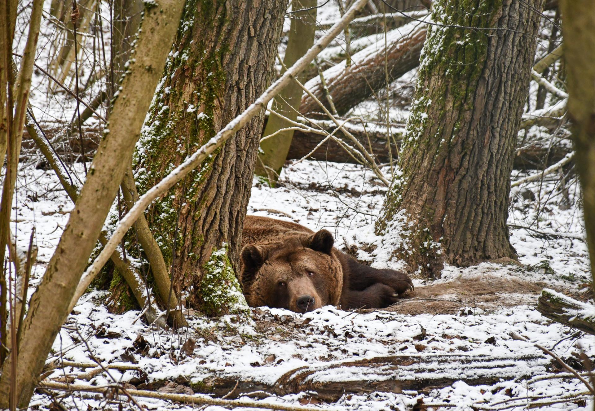 Balou im Schnee