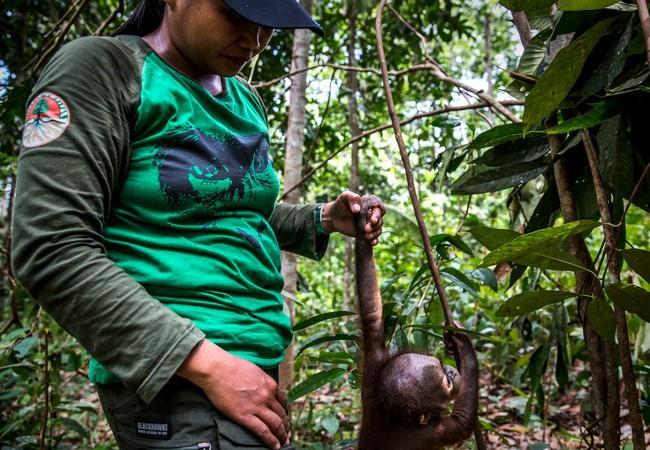 Orang-Utan Gerhana gemeinsam mit einer Pflegerin