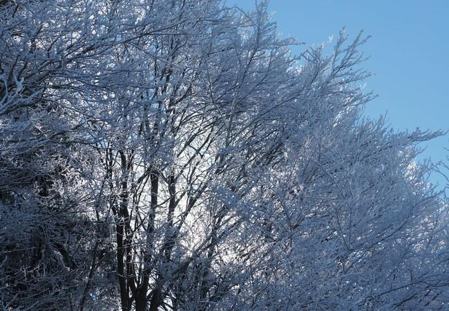 Die Sonne scheint durch schneebedeckte Äste