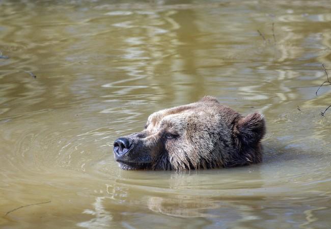 Lothar schwimmt im See