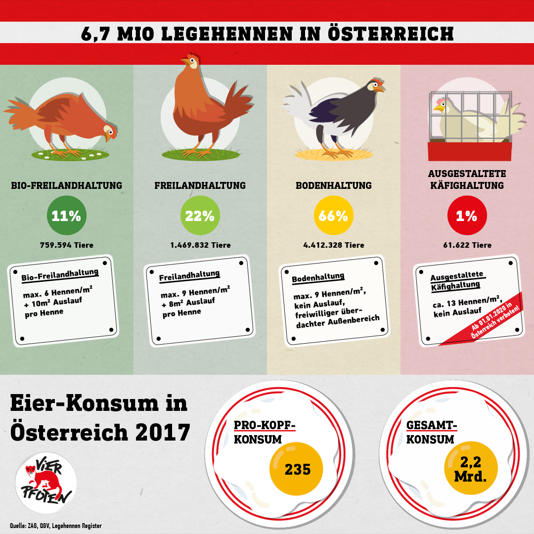 Legehennen in Österreich (C) VIER PFOTEN