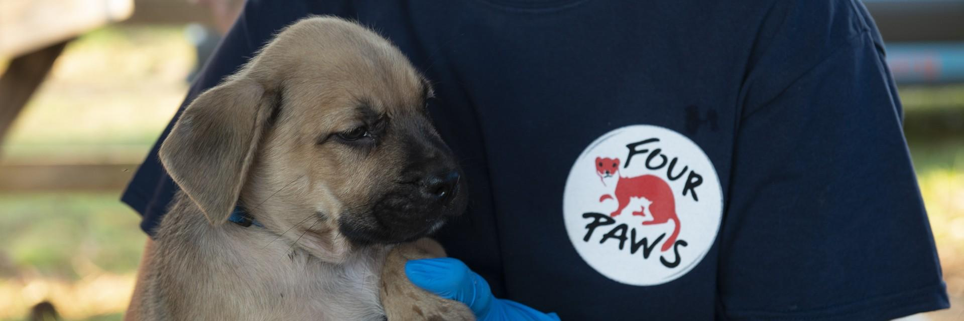 FOUR PAWS team in action