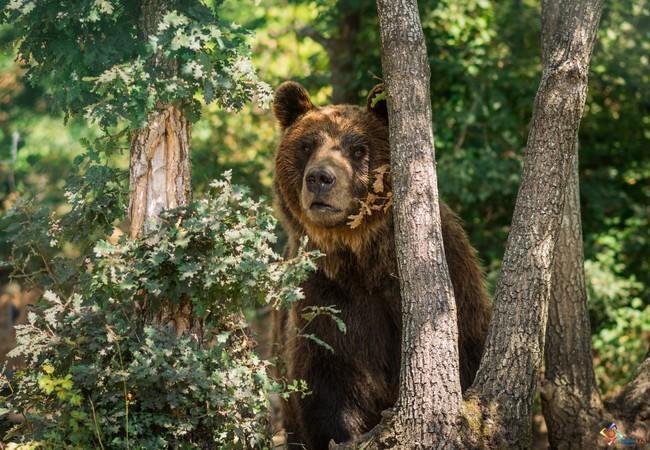 Bear Ari in the trees