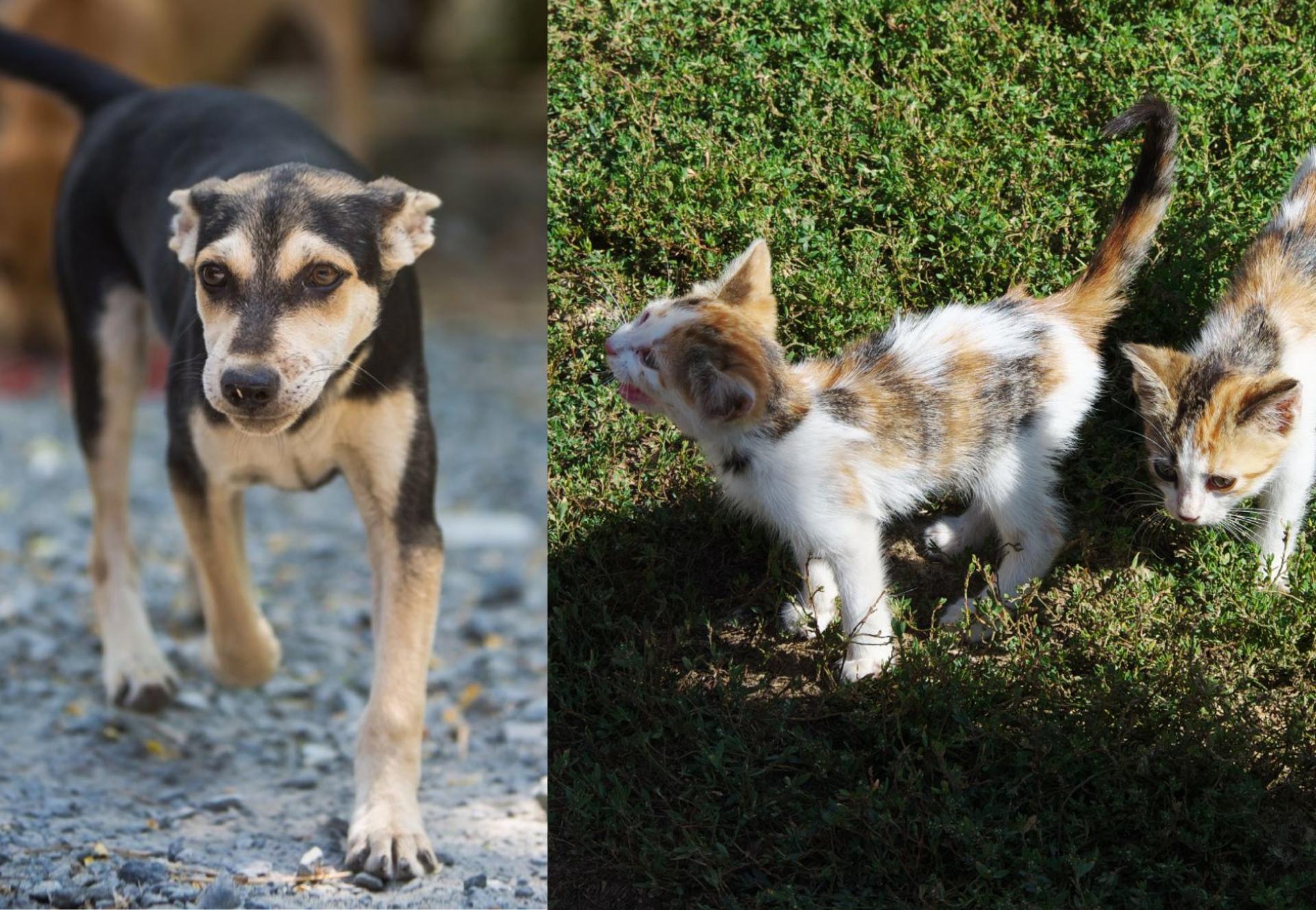 Streunerhund und -katze