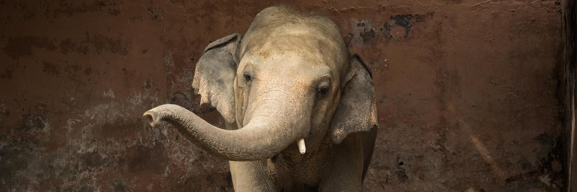Kaavan im Zoo von Pakistan