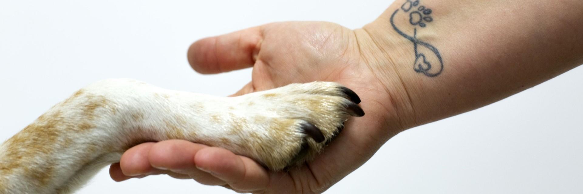 Hundepfote und Menschenhand