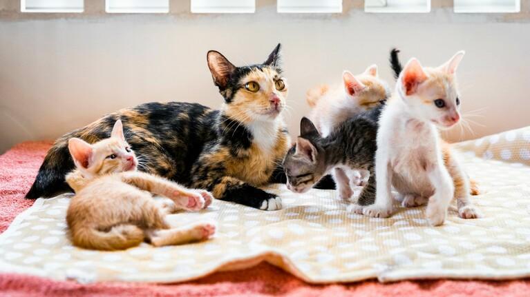 Dek de kosten voor een maand zorg voor een gered dier